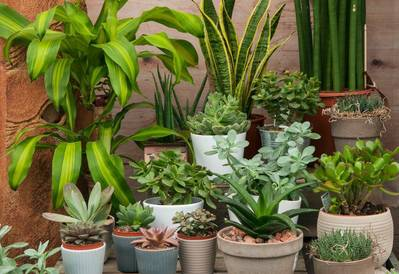 Selection of houseplants