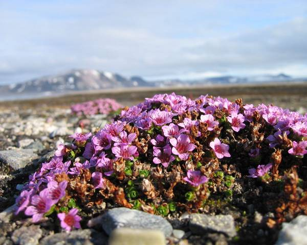 A picture of a Alpines