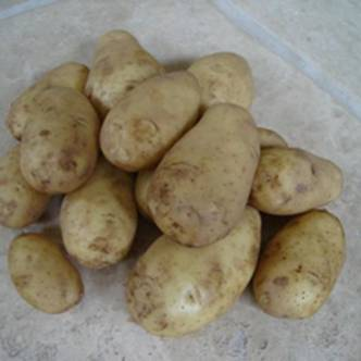 Potato Tubers. Second Early.  Charlotte. 1KG