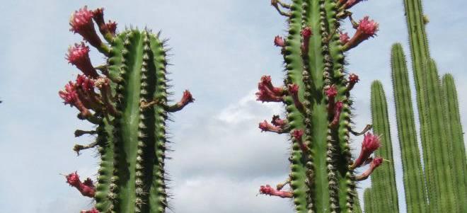 A close up of a cactus