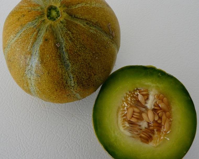 A melon fruit