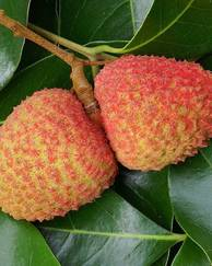 A photo of Lychee