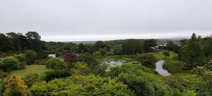 A close up of a lush green hillside at Glenwhan Gardens