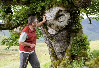 elm tree with a 'face'
