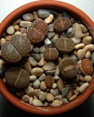 A photo of Living Stones