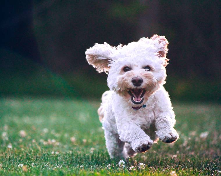 An excited puppy running across the grass to explore the world