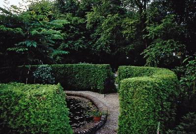 A green hedge in a garden