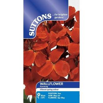 Suttons Wallflower Seeds Fire King