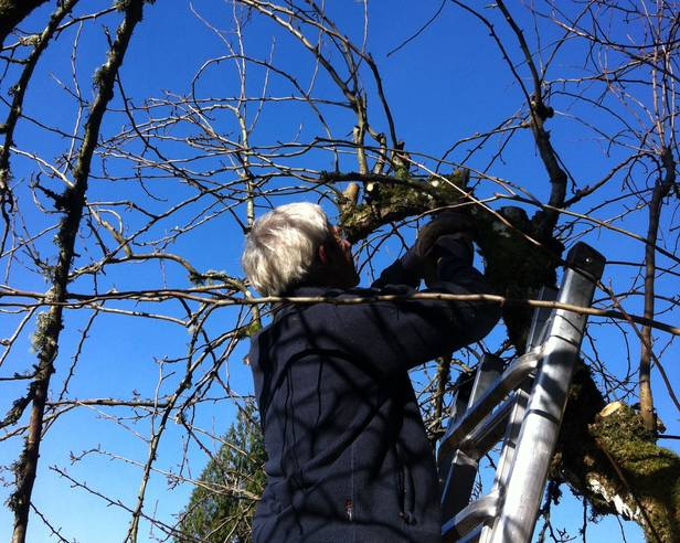 A person pruning a tree