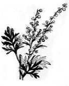 A photo of Wormwood