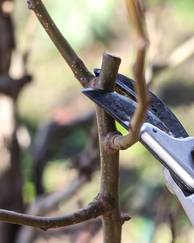 Why you need to prune your plants