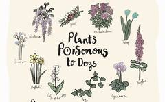 10 Common Plants Poisonous to Dogs