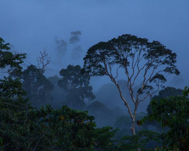 Exceptionally tall tropical trees in Borneo's remote Danum Valley conservation area