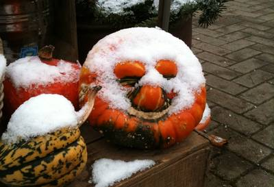 Snow coated pumpkin and squash
