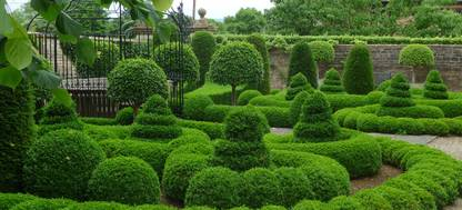 A collection of topiary