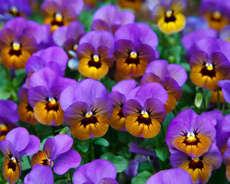 A bunch of yellow and purple flowers