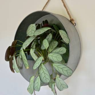 Zinc round hanging wall planter