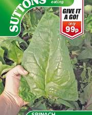 Suttons Spinach Seeds Gigante Di'nverno