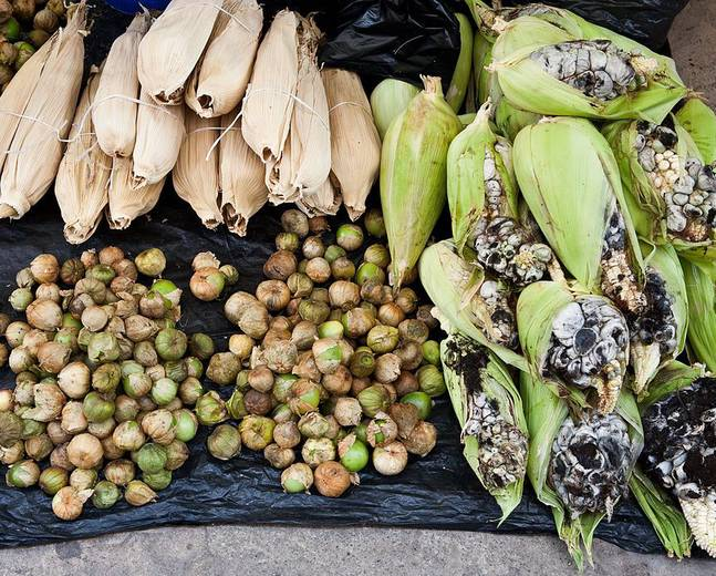 A group of corn smut infected fruit and vegetables called huitlacoche on display