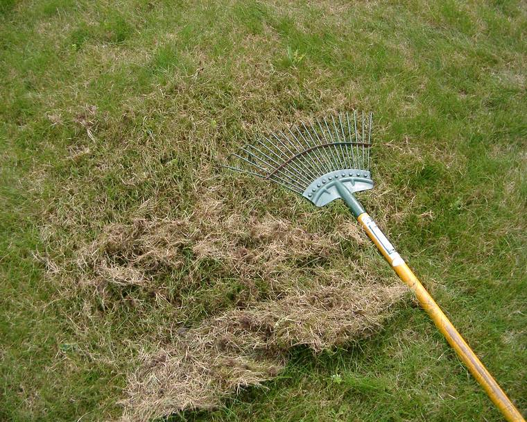 scarifying a lawn with a rake
