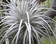 A photo of Roof Air Plant