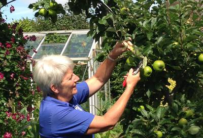 a lady summer pruning an apple tree