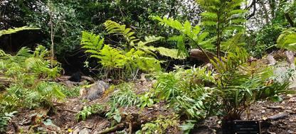 Ferns in Trebah Gardens