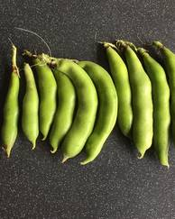 A photo of Broad Bean