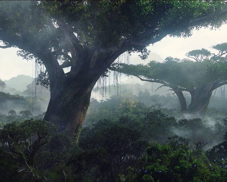 Giant trees in the film Avatar