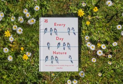 Every Day Nature book amongst daisies