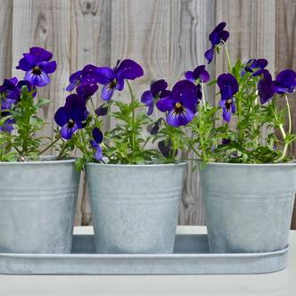 Trio of Zinc Flower Pots