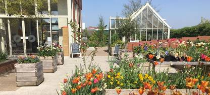 A close up of a flower garden in front of a glasshouse at Horatio