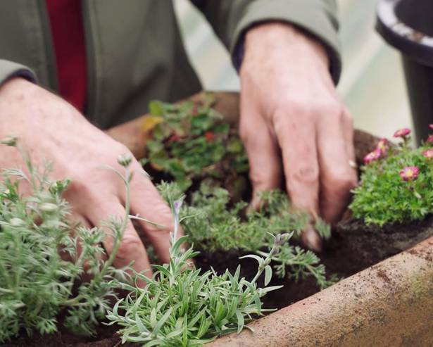 A person planting alpine plants in a sink