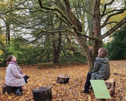 Forest Bathing, Tatton Park