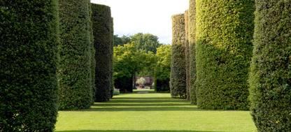 Ilex Avenue hedgerows at Arley Hall