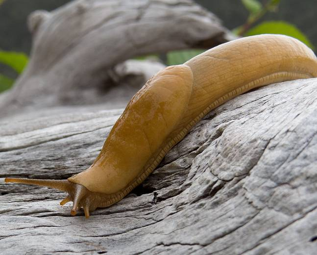 A close up of a slug