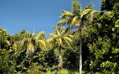 A photo of Forster Sentry Palm
