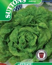Suttons Lettuce Seeds Tom Thumb