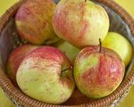 A bowl of Malus domestica 'James Grieve' apple fruits