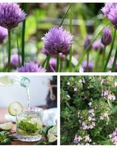 Organic Thyme & Organic Chives & Spearmint Seeds Bundle(Free Postage)