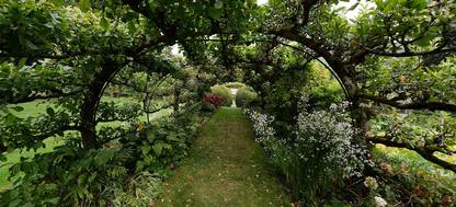 Apple trees at Heale Gardens