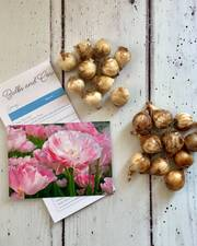 20 spring bulbs for a window box or planter