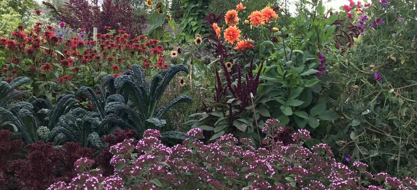 Flowers in potager at Archerfield Walled Garden