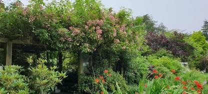 A group of bushes in a garden at Glenwhan Gardens