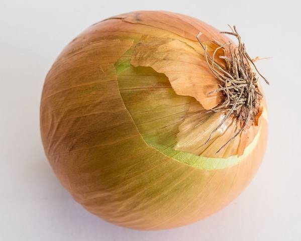 A picture of a Onion