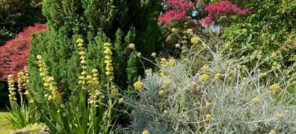 A group of shrubs and bushes at Greencombe Gardens