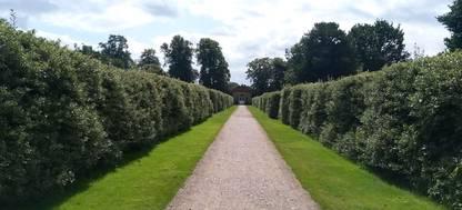 Holly maze