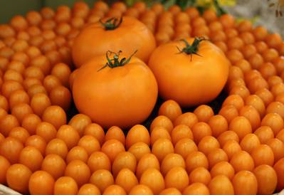 A pile of orange tomatoes