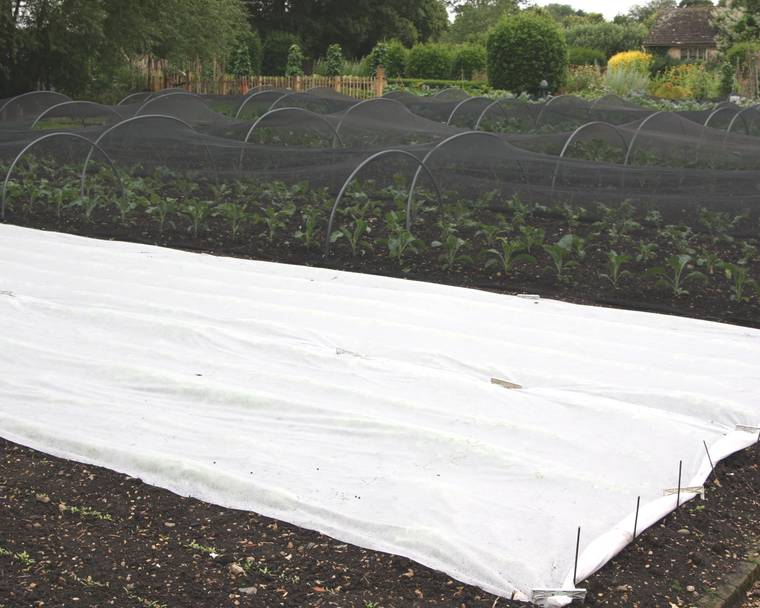 Floating mulch fleece covering a crop