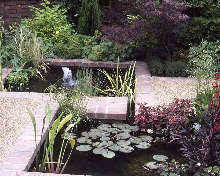 A contemporary pond with plants